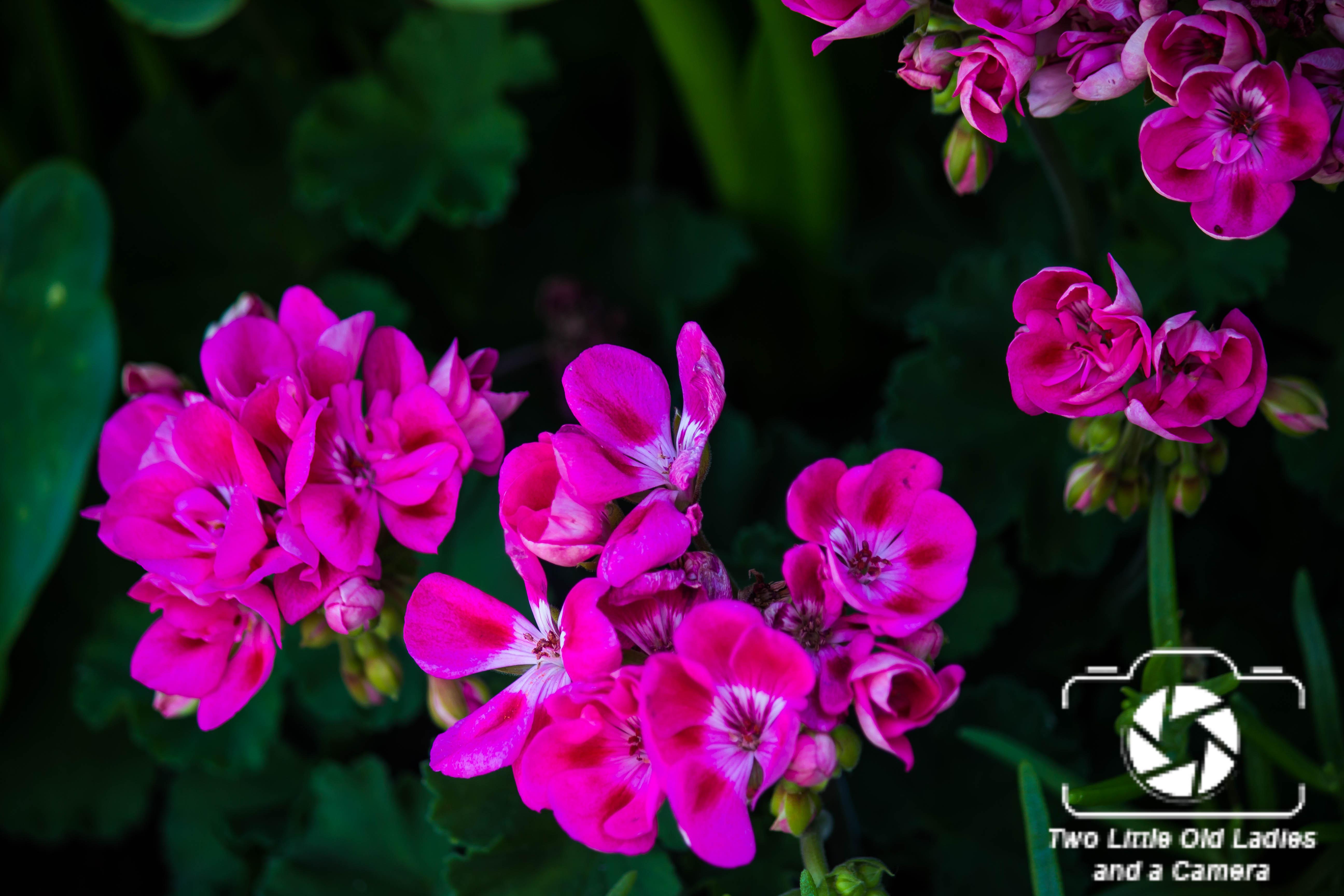 Flowers at Thai Chiang Mai Restaurant