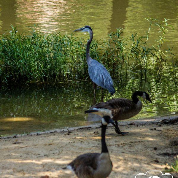 Checking Out Salem Lake in Winston Salem NC