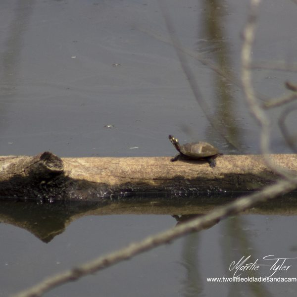 Turtles and Woodpeckers